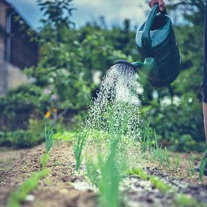 Konewka podlewająca ogródek